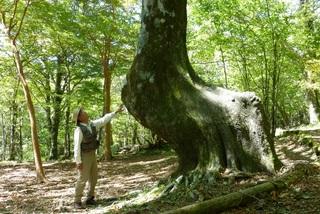 キリンの木 写真.jpg