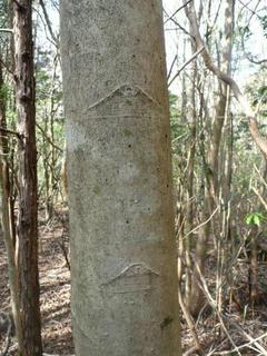 富士山マークの樹.JPG