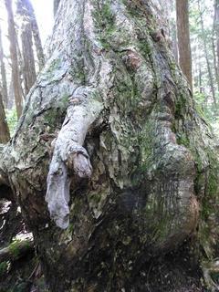 握手を求める樹.JPG