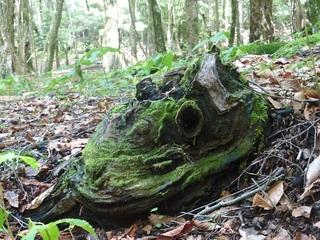 樹木=怪物.jpg