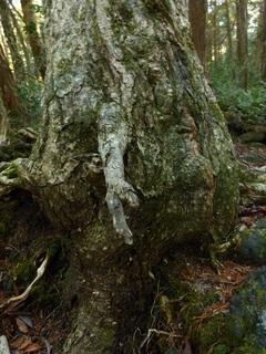 樹木=握手.jpg