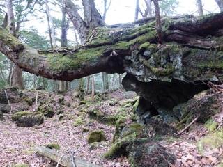 樹木=象 2.jpg