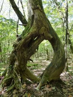西臼塚の奇木2.jpg